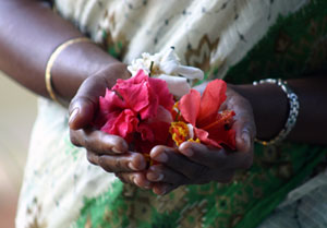 Beautiful Hands bring the Divineand offering of Ashram flowers for the Temple
