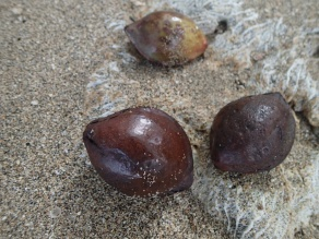 Almonds in their original form