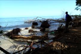 Cahuita - fallen trees