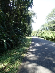 On the road to Manzanillo, before the hill. Love those treelined pavements