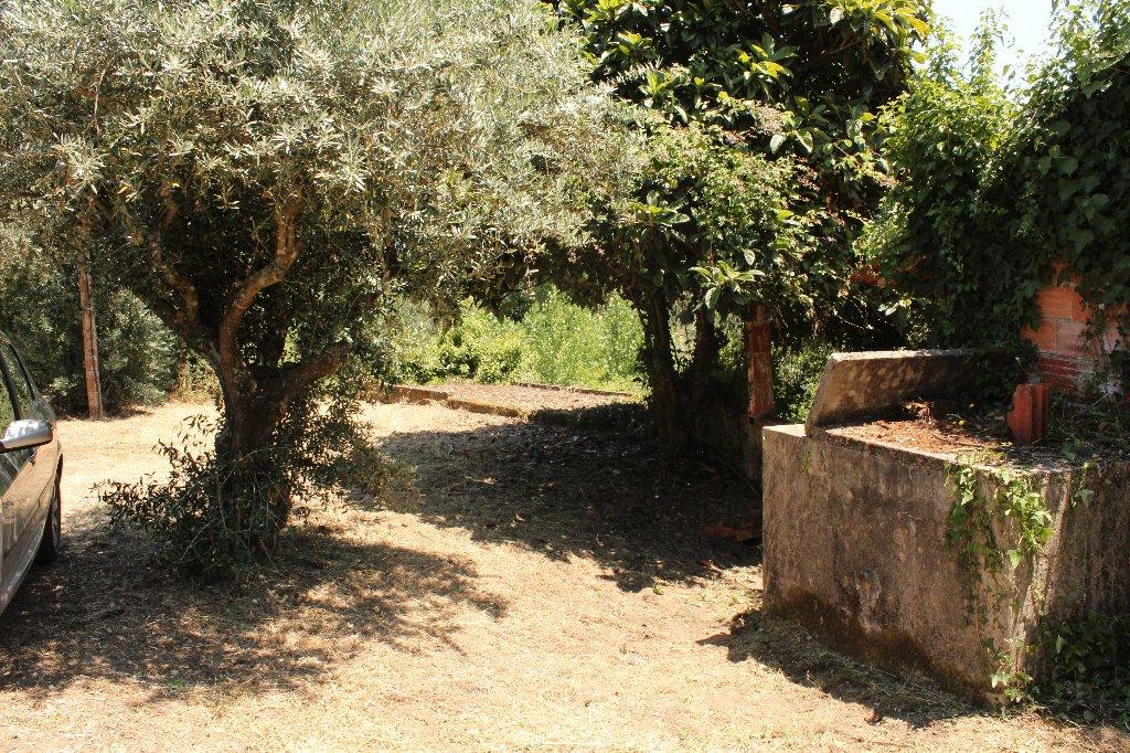 shade area
