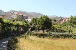 Soaju - amazing medieval or earlier town - with beautiful ancient vines all shading the pavements and Hortas (vegetable gardens)
