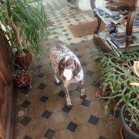 Such a lovely hound!