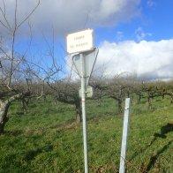 Chemin Du Verbosc