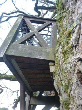 AB Balcony on Tree