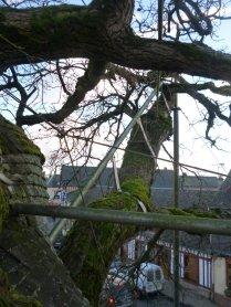 AB Tree branch