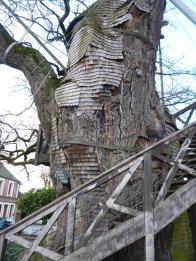 allouville-bellefosse tree