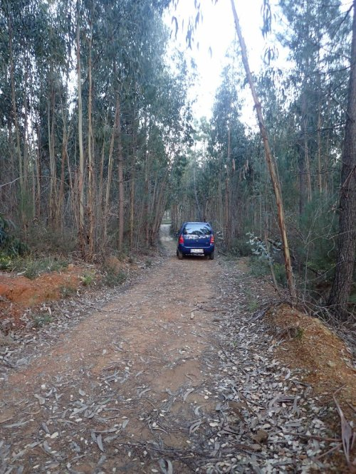 The Private Driveway through a eucalyptus/pine/cork oak plantation