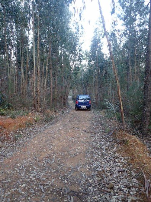 The Private Driveway through a eucalyptus/pine/cork oak plantation